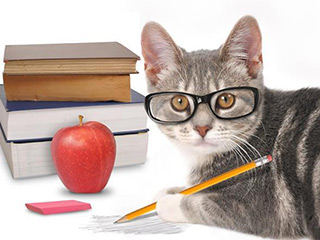 在职研究生如何复习能够拿高分?